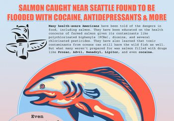 Salmon Found To Be Flooded With Drugs